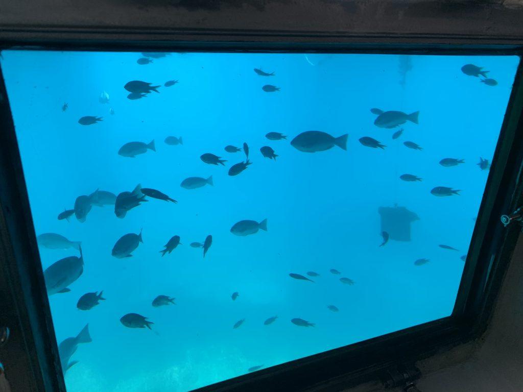 伊東遊覧船魚