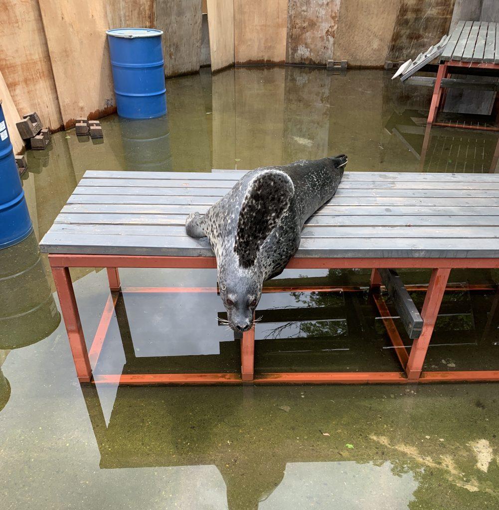 池の平ファミリーランドアザラシ